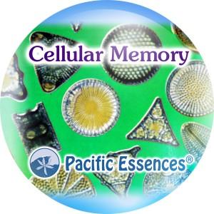 Cellular Memory