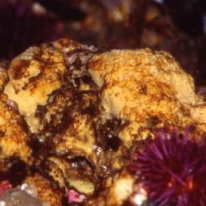 Sponge - 25 ml